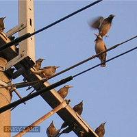 Bird08010704
