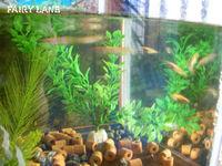 Fish08080704